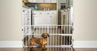 Exploring The Major Benefits And Uses Of Indoor Gates For Dogs