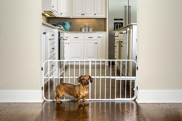 Exploring The Major Benefits And Uses Of Indoor Gates For Dogs ...