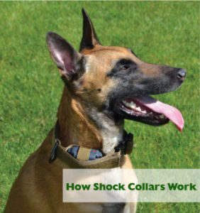 dog-shock-collar