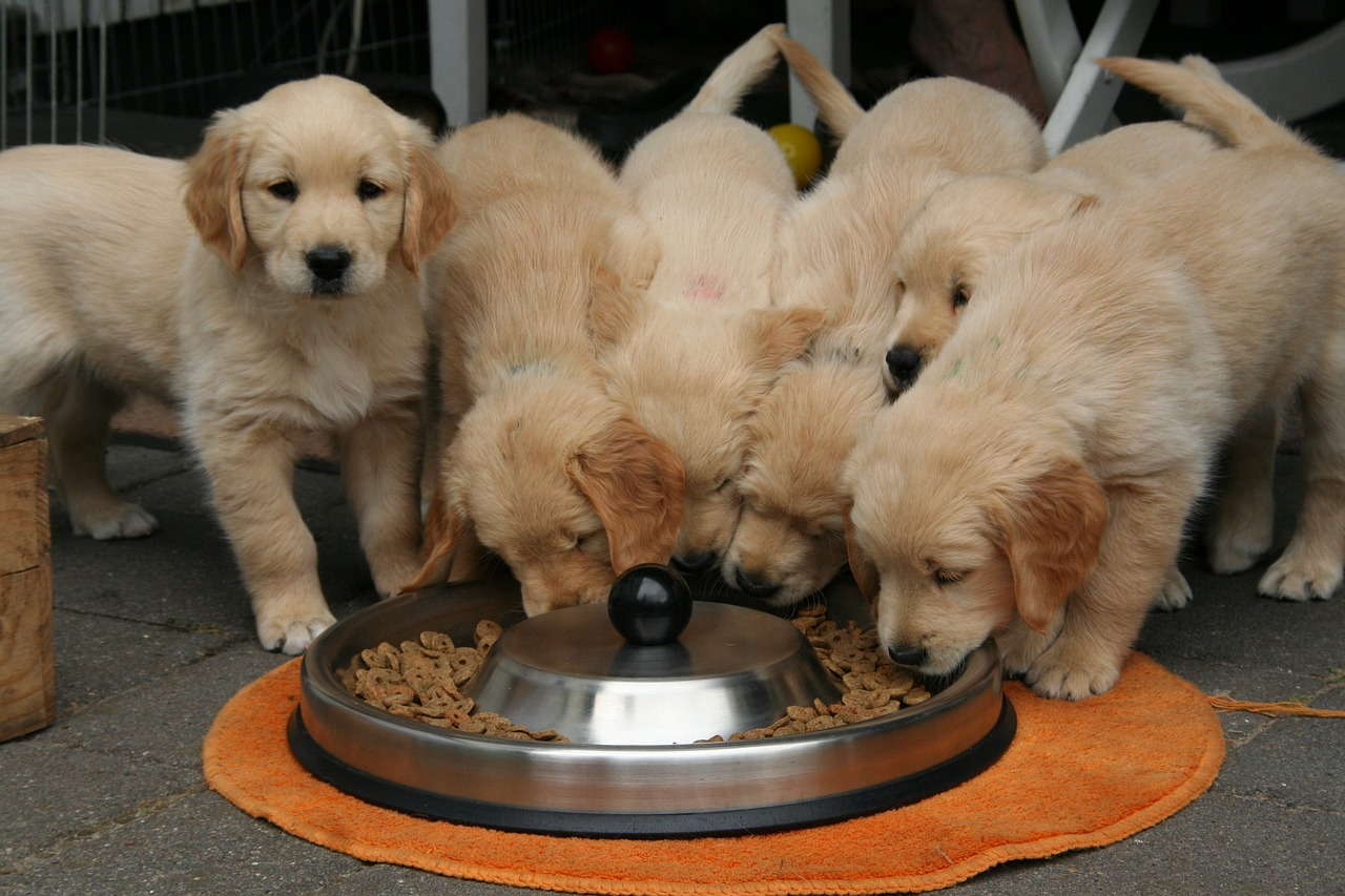The Right Food for Your Dog